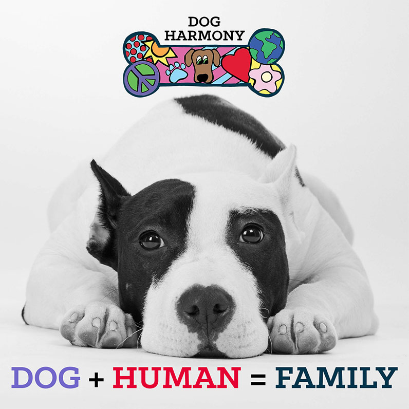 dog-harmony-web-2